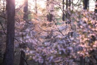 春の自然-2