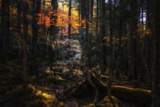 秋の自然-1