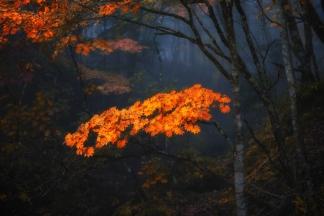 秋の自然-2