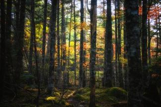 秋の自然-3
