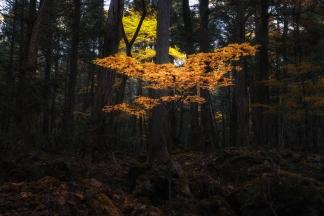 秋の自然-4