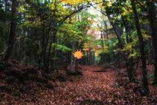 秋の自然-5