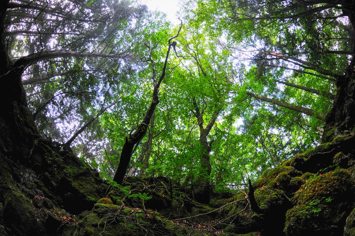 青木ヶ原樹海のイメージ