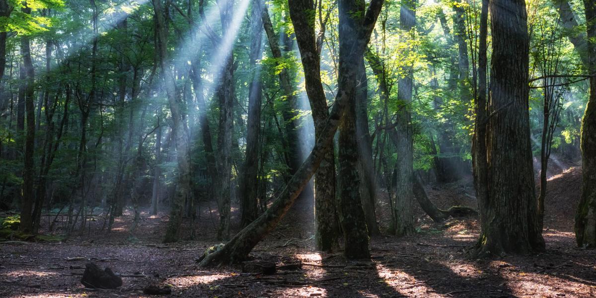 癒しの森イメージ