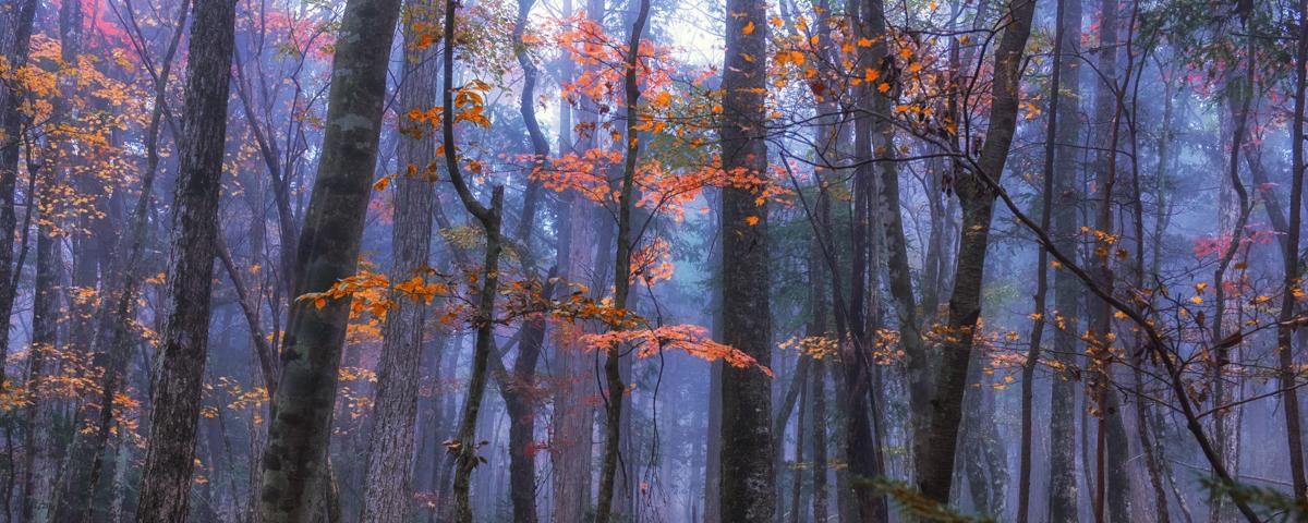 森の癒しイメージ