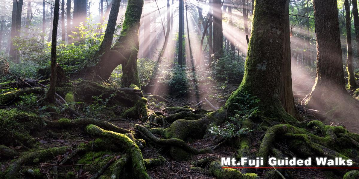 富士山の自然をガイドウォーク