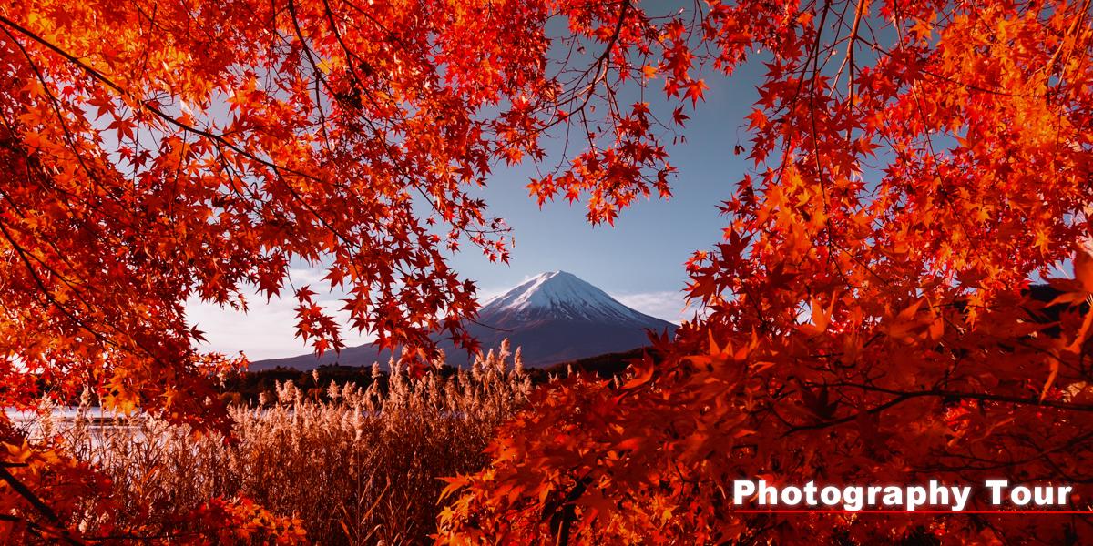 富士山の自然を撮影するツアー