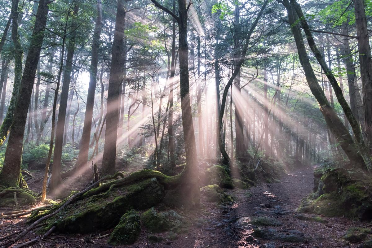 青木ヶ原樹海の光芒