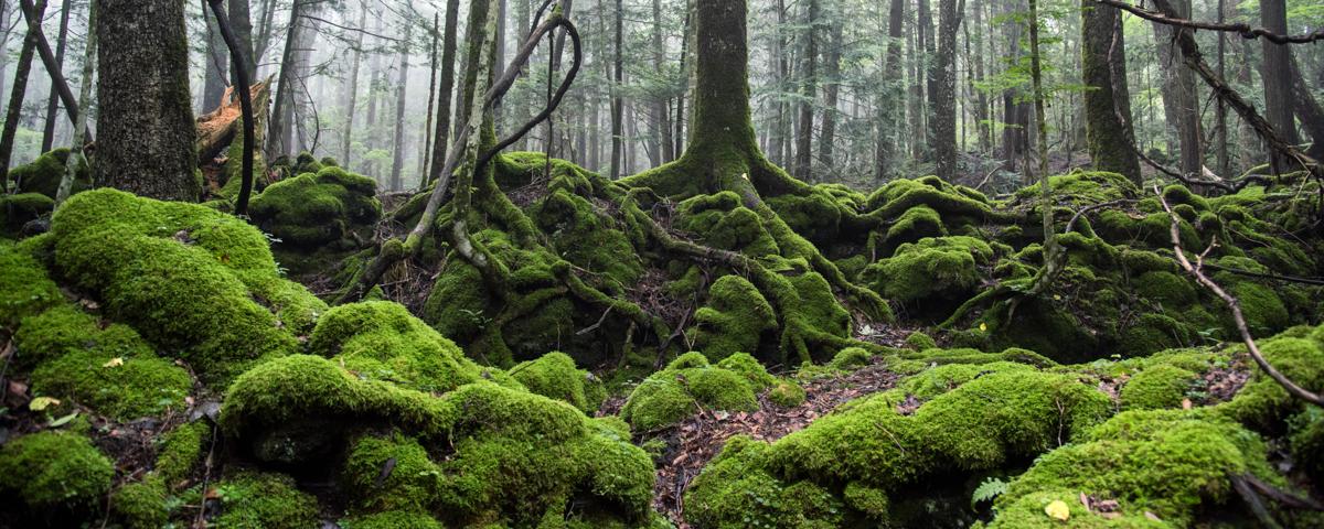 苔の楽園イメージ