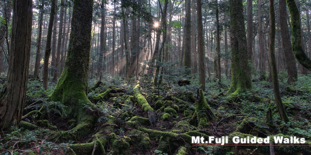 富士山の大自然をガイドウォーク